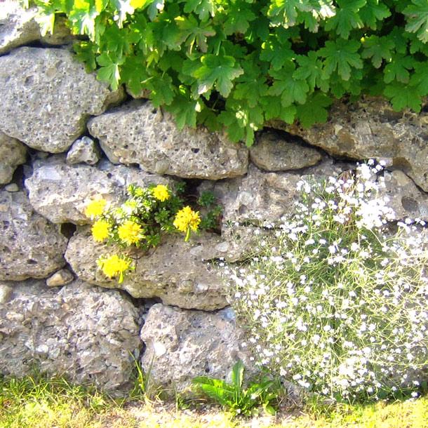 Mauersteine Petersberg, Nagelfluh