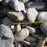 Findlinge Mini-Findlinge Gneis